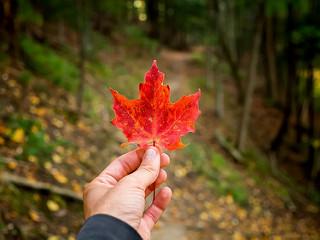 mano con hoja de otoño